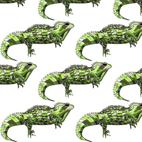 Tuatara on white