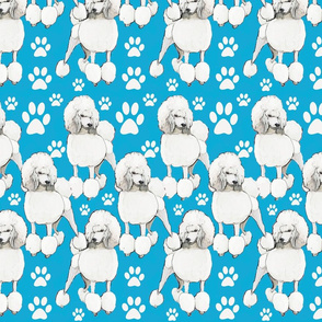 poodles on blue backround