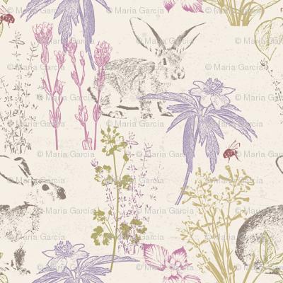 Wildflowers of the Tallgrass Prairie