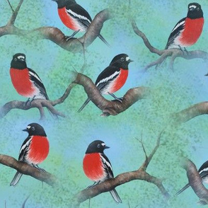 scarlet_robins_repeat