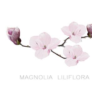 Botanicals_Magnolia
