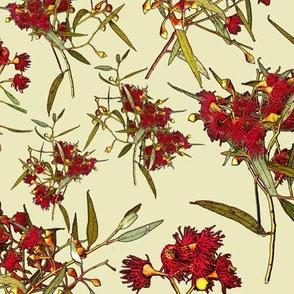 Eucalyptus leucoxylon rosea – Red Form  CLOTH ece8be
