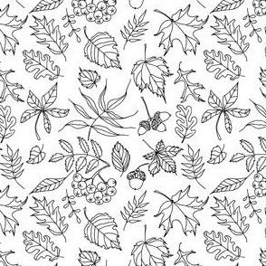 Autumn_leaves_2015_1