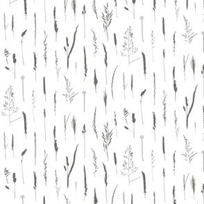 Grasses Grey