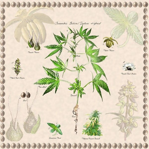 Cannabis Botanical 12x12