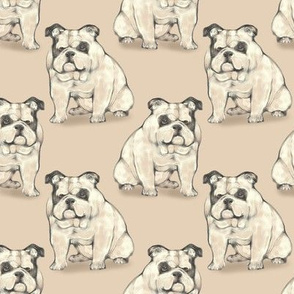Sitting Bulldog, Tan