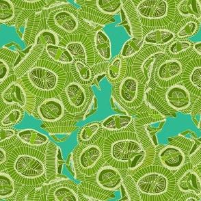 ocean algae