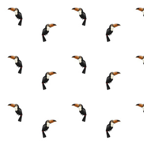 Toucans (small)