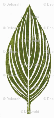 hosta leaves - off white background