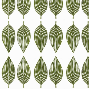 hosta leaves - off white background