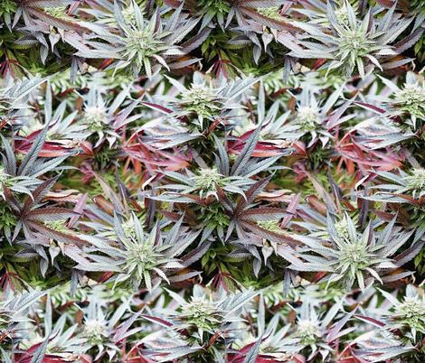 Vivid Ganja Garden fabric camomoto Spoonflower