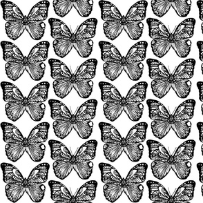 Color a Butterfly Tangle