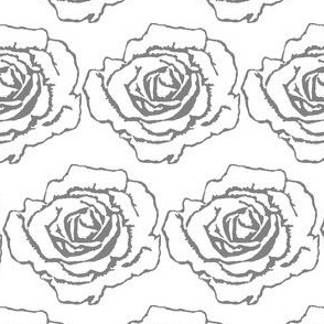White and Gray Rose