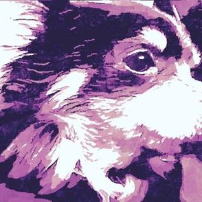 Chihuahua purple profile