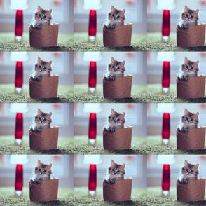 Daisy-the-cat5_8da61