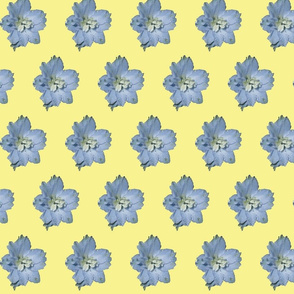 Single larkspur flower-ch