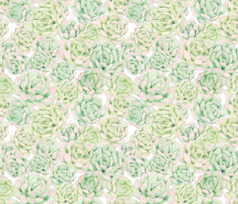 Hand Painted Succulent Wallpaper fabric by anom-aly on Spoonflower - custom fabric