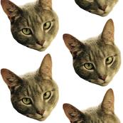 Dennis P. Cat