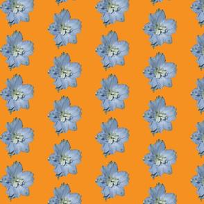 Single larkspur flower - orange