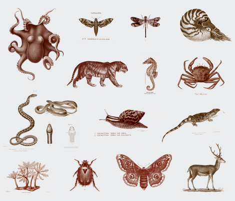 Zoological fabric by lisa_brown on Spoonflower - custom fabric