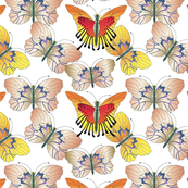 Oyster Yellow and Red Butterflies