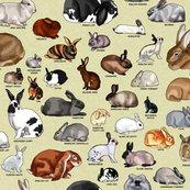 Rbreeds_of_rabbits_shop_thumb