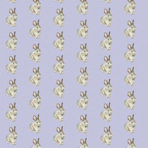 polka dot bunny