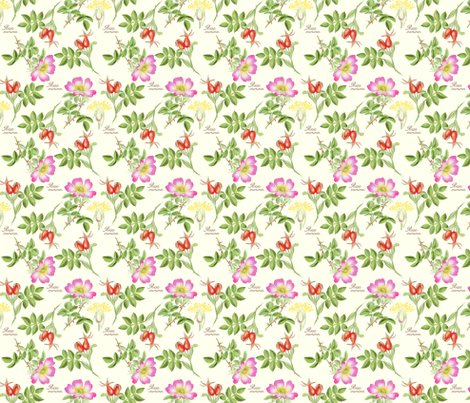 Rrbothanical8-rosa-canina_shop_preview