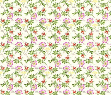 bothanical8-rosa-canina fabric by gaiamarfurt on Spoonflower - custom fabric