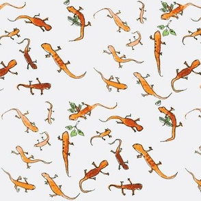 orange lizards