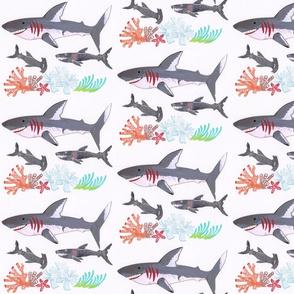 Shark Dude!