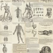 Renaissance_anatomy_shop_thumb