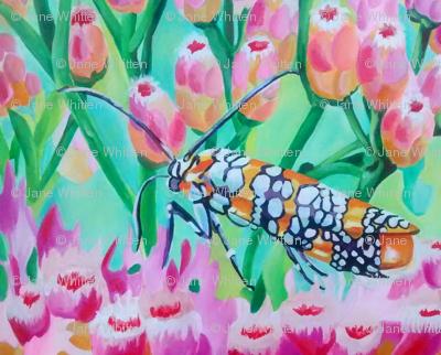 Moth on Pink Salt-marsh Fleabane-ed