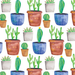 Clay Pot Cactuses