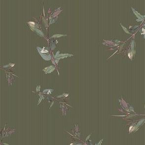 Eucalyptus ficifolia foliage on green 646857