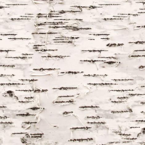 Birch Bark fabric by willowlanetextiles on Spoonflower - custom fabric