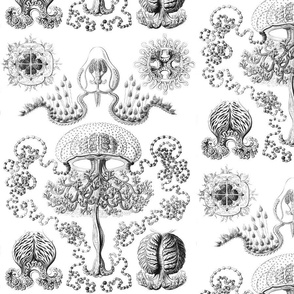 Vintage Jellyfish in Gray Scale
