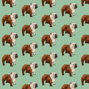 English Bulldog - Green