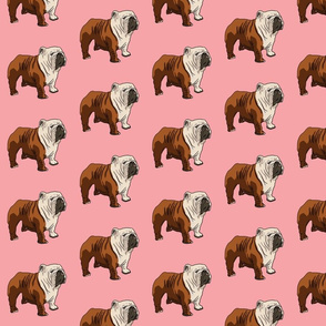 English Bulldog - Pink
