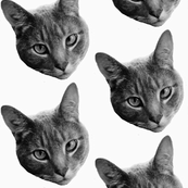 Dennis P. Cat B&W