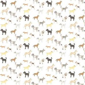 pups mini