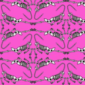 SphynxieBonez Reaching Flipped in Hot Pink