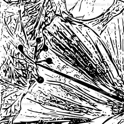 Hibiscus - Hand drawn Vector