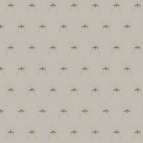 crane_fly
