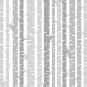 Rbirch_trees_gray_on_white_background_shop_thumb