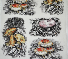 Rmushrooms_pen_and_ink_rev3_comment_630119_thumb
