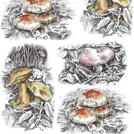 Mushrooms, Pen and Ink fabric by eclectic_house on Spoonflower - custom fabric