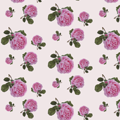rose-fabric_and_wallpaper