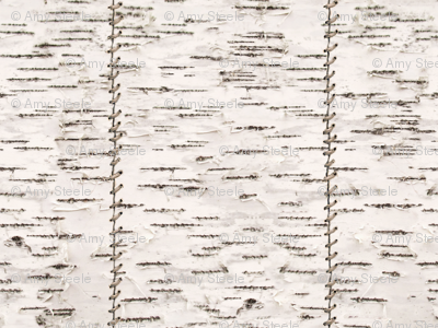 Stitched Birch Bark