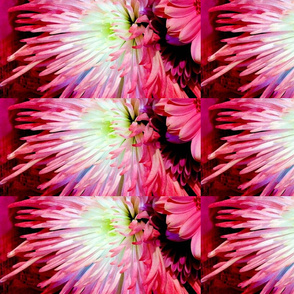 pink_burst_painted_darker_copy